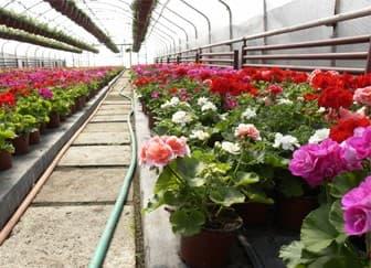 Как заработать на выращивании цветов