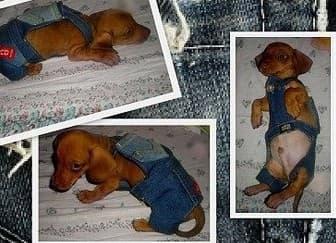 Бизнес план пошиву одежды собак