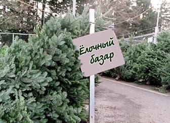 Что нужно для продажи ёлок. Торговля елками под новый год. Важные тонкости торговли