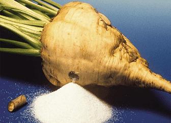 В каких районах россии выращивают сахарную свеклу