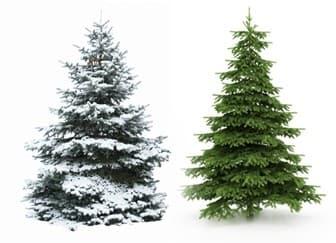 Как сделать бизнес по продаже елок на Новый Год