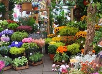 Регистрация ип для цветочного магазина регистрация ооо в мифнс 46