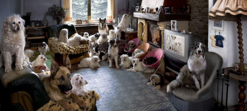 Изображение - Гостиницы для животных img-721-1488023536
