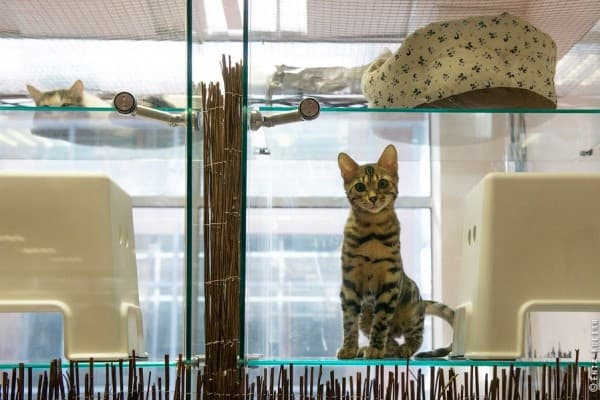 Изображение - Гостиницы для животных img-721-1488023701